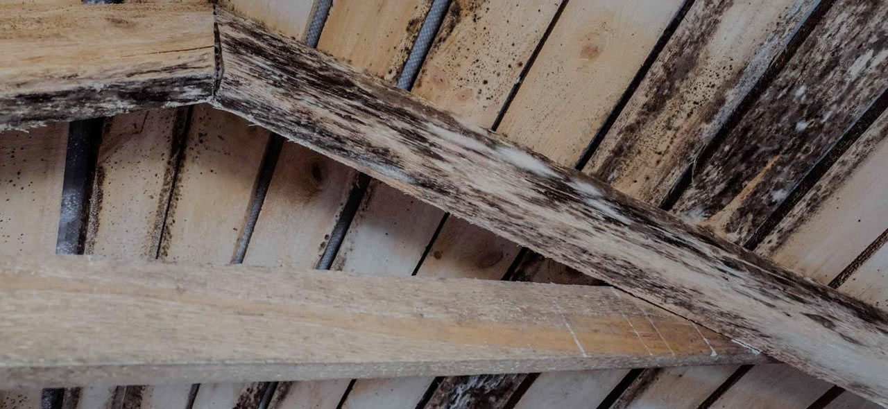 Mold in Your Attic